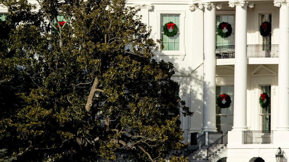 Part Of Weakened White House Magnolia Tree With Tennessee Roots To