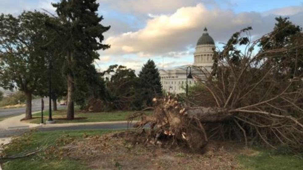 8 Historic Trees At Utah State Capitol Blown Down From High Winds Kutv