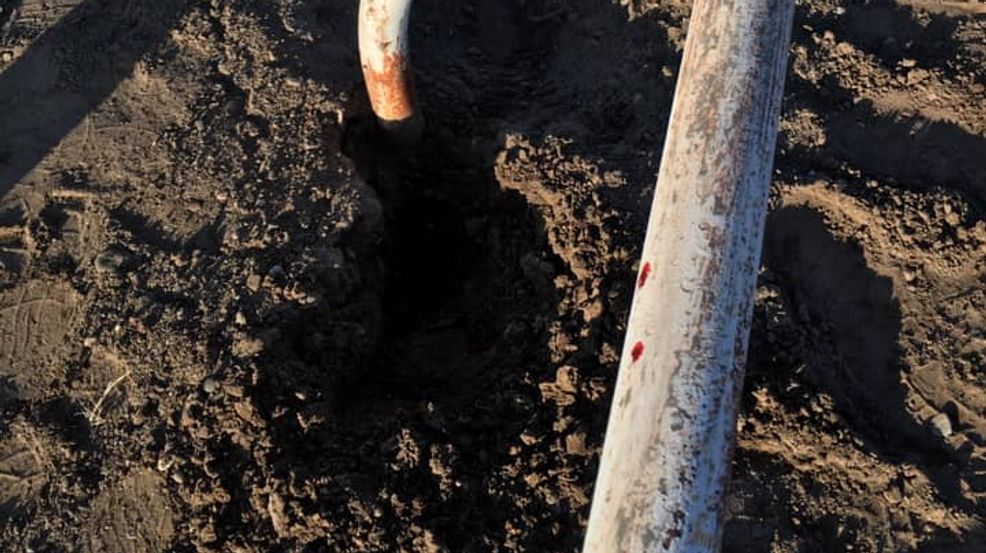 Horse Trips On Problematic Prairie Dog Hole In Utah Dies Kutv